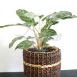 rattan-planter