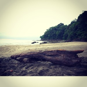 Drift Wood (Montemar Beach Resort)
